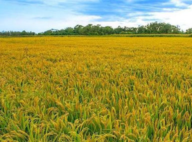 2020年重点强农惠农政策
