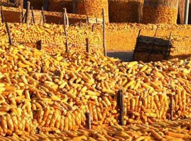 """中储粮公布""""玉米变质""""调查结果"""
