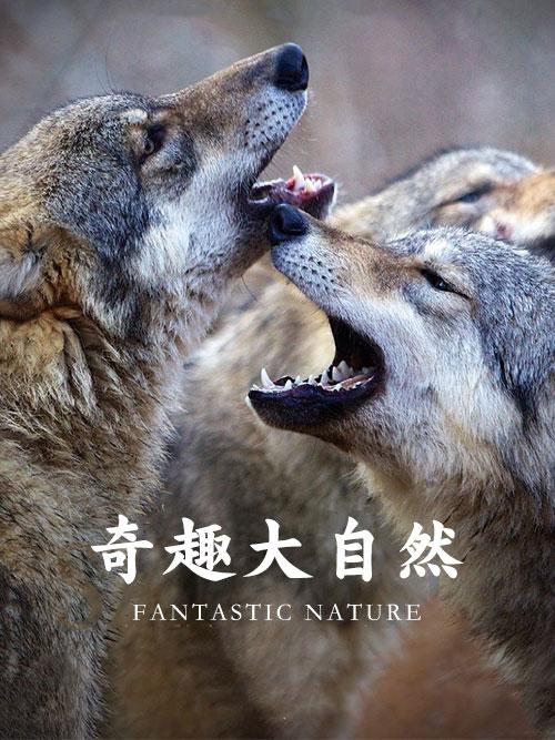 奇趣大自然(2)